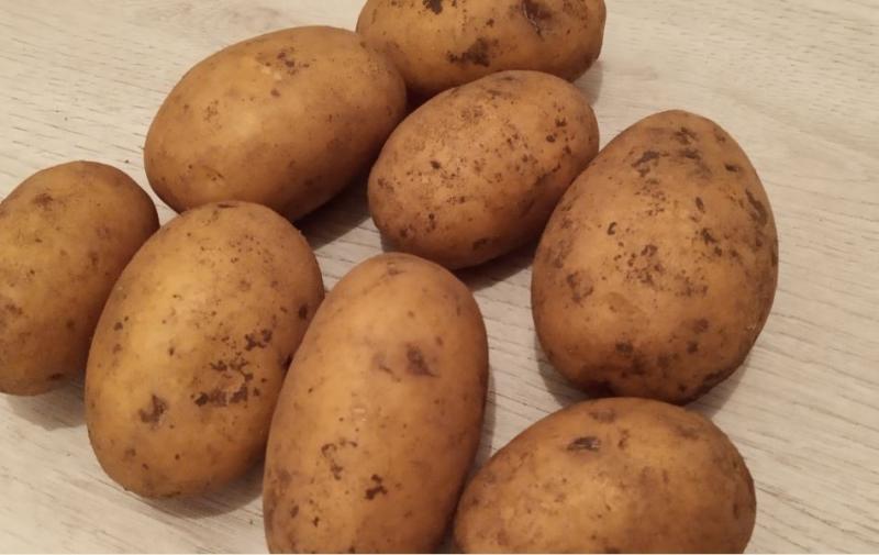 Семенной картофель элита от производителя.